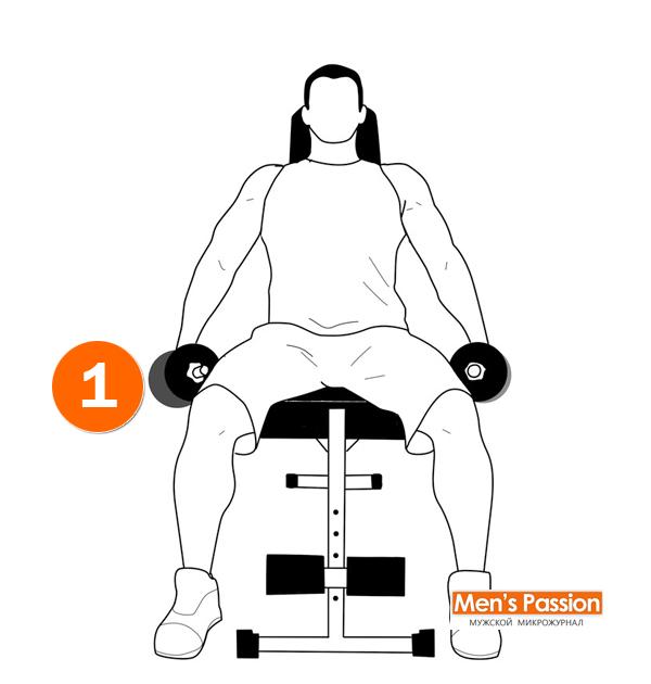 Техника выполнения разведения рук с гантелями сидя