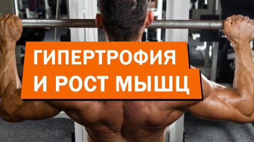 Гипертрофия и рост мышц